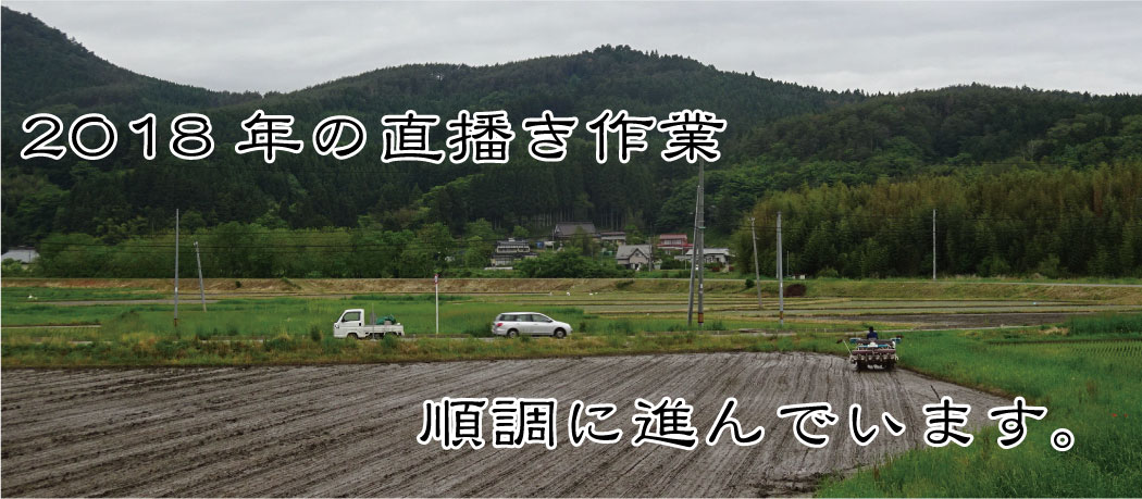 芳賀さんの直播き作業、順調に進んでいます