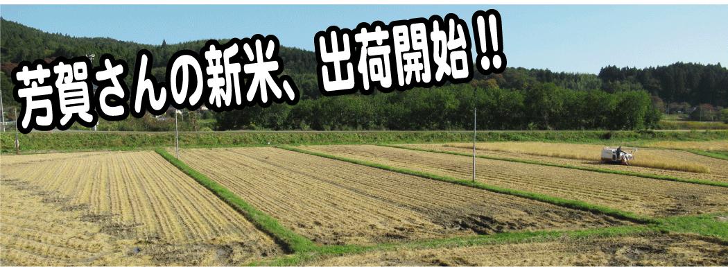 芳賀さんの新米、出荷開始!!